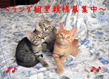 Image14_07_09_001.jpg